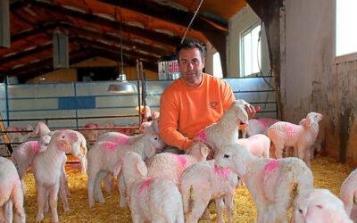 El ovino combate los patógenos